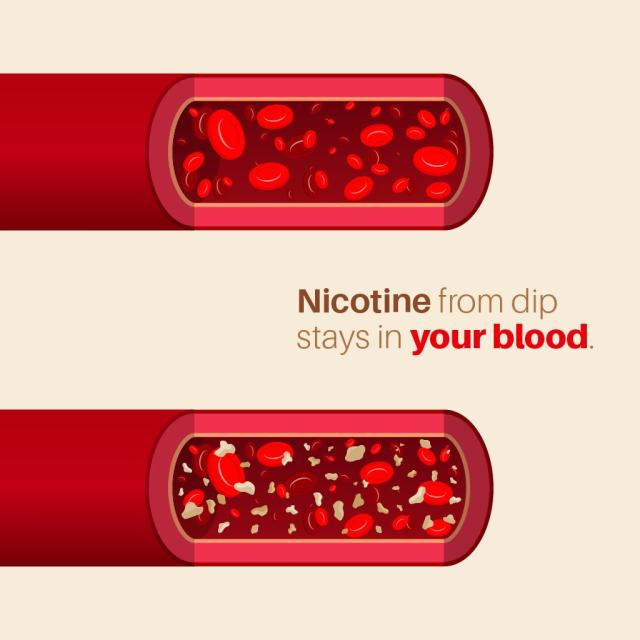 "animated picture of blood with and without nicotine with text saying ""nicotine from dip stays in your blood"""